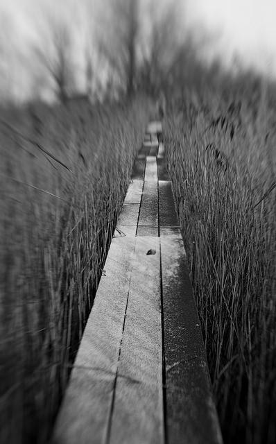 """""""Path"""" by Thomas"""